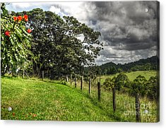 Countryside With Old Fig Tree Acrylic Print by Kaye Menner