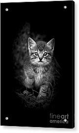 Courageous Acrylic Print by Kim Henderson