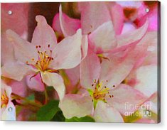 Crabapple Floral Paint Acrylic Print by Donna Munro