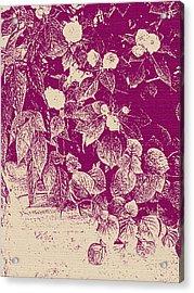 Cranberry Cascade Acrylic Print by Katharine Birkett