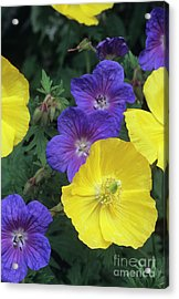 Cranesbill And Iceland Poppy Flowers Acrylic Print by Archie Young