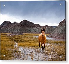 Crazy Horse Acrylic Print by Ron  McGinnis