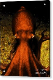 Creatures Of The Deep - The Octopus - V4 - Orange Acrylic Print by Wingsdomain Art and Photography