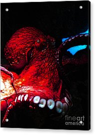 Creatures Of The Deep - The Octopus - V6 - Red Acrylic Print by Wingsdomain Art and Photography