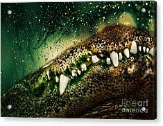 Crocodile Teeth Acrylic Print by Denis Pristavko
