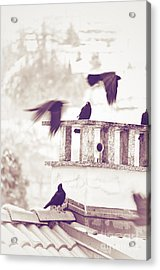 Crows On A Roof Acrylic Print by Silvia Ganora