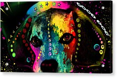 Cute Dog  Acrylic Print by Mark Ashkenazi