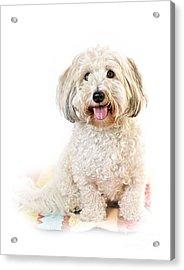 Cute Dog Portrait Acrylic Print by Elena Elisseeva