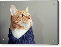 Cute Red Cat With Purple Scarf Acrylic Print by Paula Daniëlse