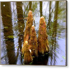 Cypress Family Of Monks Acrylic Print by Mindy Newman