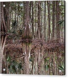 Cypress Hammock Acrylic Print by Joseph G Holland