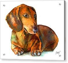Dachshund Puppy Acrylic Print by Christy  Freeman