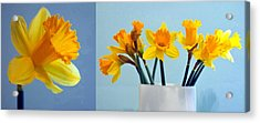 Daffodils Acrylic Print by Cathie Tyler