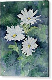 Daisies II Acrylic Print by Sam Sidders