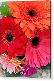 Daisy Bouquet Acrylic Print by Lynnette Johns