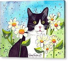 Daisy M. Tuxedo Acrylic Print by Terry Taylor