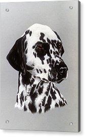 Dalmatian Acrylic Print by Patricia Ivy