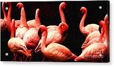 Dancing Flamingos Acrylic Print by Wingsdomain Art and Photography