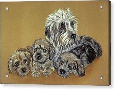 Dandie Dinmont Terriers Acrylic Print by Patricia Ivy