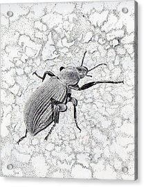 Darkling Bug Acrylic Print by Inger Hutton