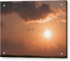 Dawn Flight Acrylic Print by Robert Brown