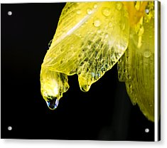 Day Lilly Drop Acrylic Print by Vicki Jauron