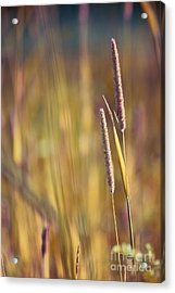 Day Whisperings Acrylic Print by Aimelle