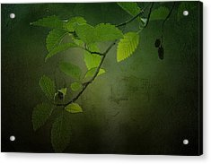 Daybreak Tiptoes In Acrylic Print by Bonnie Bruno