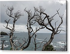 Dead  Trees Acrylic Print by Yurix Sardinelly