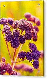 Dead Weed On Lime Acrylic Print by Bill Tiepelman