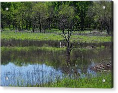 Deadwood Reflections Acrylic Print by Robyn Stacey