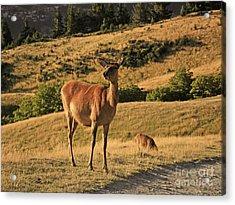 Deer On Mountain 2 Acrylic Print by Pixel Chimp