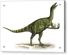 Deinocheirus Mirificus, A Prehistoric Acrylic Print by Sergey Krasovskiy