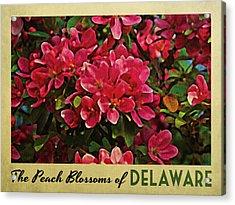 Delaware Peach Blossoms Acrylic Print by Flo Karp