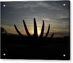 Desert Bloom Acrylic Print by Aj Willams