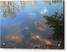 Different Worlds Acrylic Print by Karol Livote