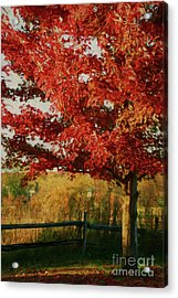 Digital Painting Maple Tree In Full Color Acrylic Print by Sandra Cunningham