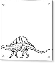 Dimetrodon - Dinosaur Acrylic Print by Karl Addison