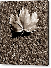 Dipped In Bronze Acrylic Print by Luke Moore