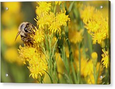 Do I Have Something On My Face Acrylic Print by Heidi Smith