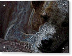 Do Not Disturb Acrylic Print by One Rude Dawg Orcutt