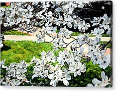 Dogwood Blooms In A Virginia Church Yard Acrylic Print by Thomas Akers