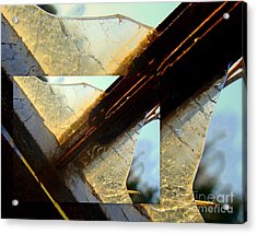 Double Jointed  Acrylic Print by Tammy Cantrell