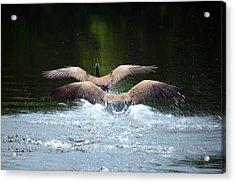 Double Landing Acrylic Print by Karol Livote