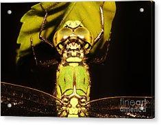 Dragonfly Closeup Acrylic Print by Lynda Dawson-Youngclaus