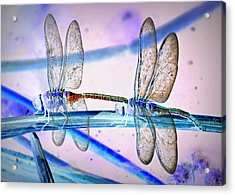 Dragonfly Fantasy Acrylic Print by Fraida Gutovich