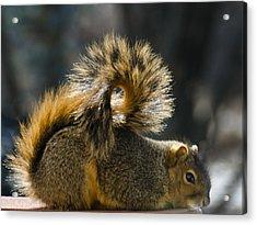Dreamin Squirrel Surfer Acrylic Print by LeeAnn McLaneGoetz McLaneGoetzStudioLLCcom