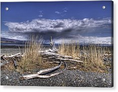 Driftwood By The Sea Acrylic Print by Michele Cornelius