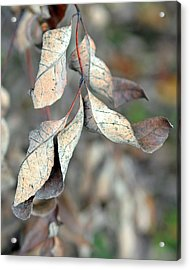Dry Leaves Acrylic Print by Lisa Phillips
