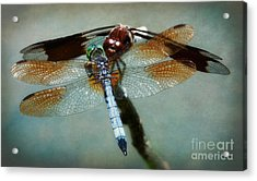 Dueling Dragonflies Acrylic Print by Susan Isakson
